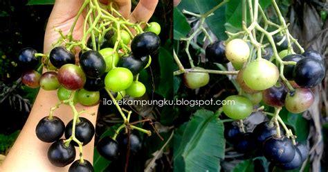 Minyak Zaitun Berapa Nya i kungku buah lakum itu gatal