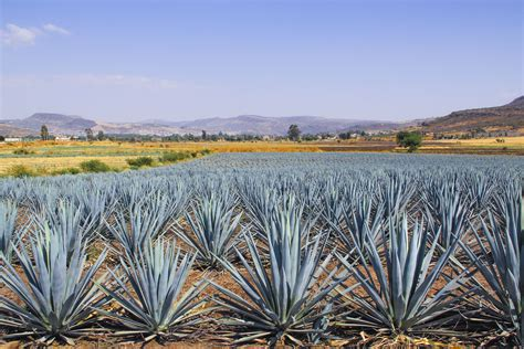 Things To Do In Tequila Jalisco