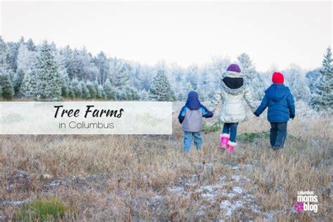 cut your own christmas tree columbus columbus area tree farms