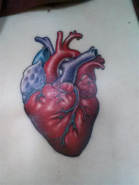 anatomically correct heart tattoo what i found out anatomically correct necklace