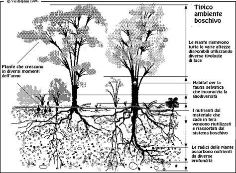 canapé cyrus habitat piante per il futuro piante innovative