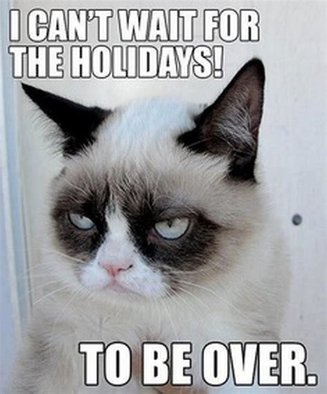 Grumpy Cat Christmas Memes - grumpy cat s christmas compilation 20 pics