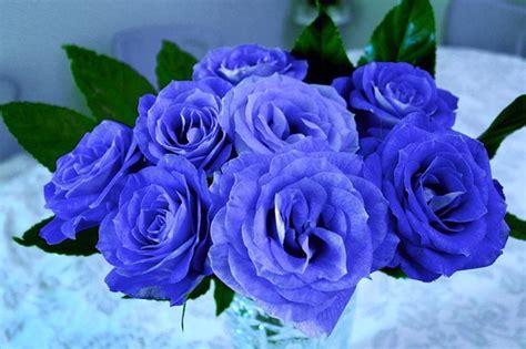 Bunga Bebybreat Asli Dan Fresh kumpulan gambar bunga mawar cantik alamendah s