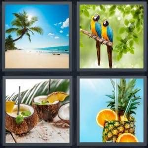 hot drink 8 letters 4 pics 1 word answer for beach parrot coconut pineapple