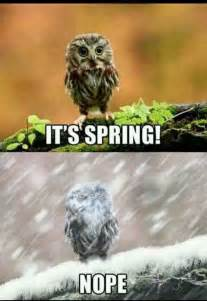Funny Spring Memes - 17 best ideas about funny friday memes on pinterest