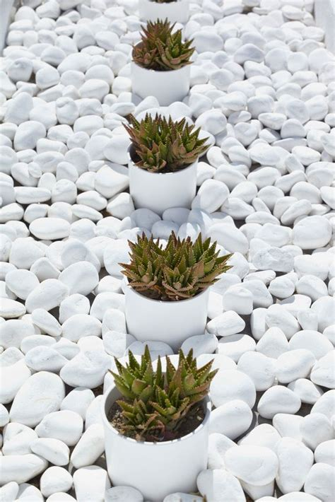 Garden Decoration With Pebbles by Votsala White Pebbles Decorating Much Of Santorini