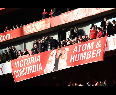 alexis sanchez dogs banner alexis sanchez arsenal fans put up banners dedicated to