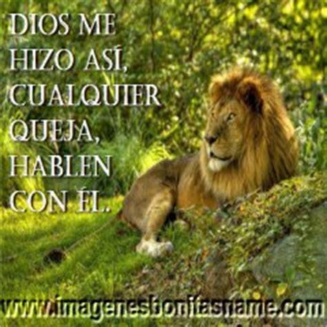 imagenes cristianas leones imagenes chistosas imagenes bonitas chistosas de