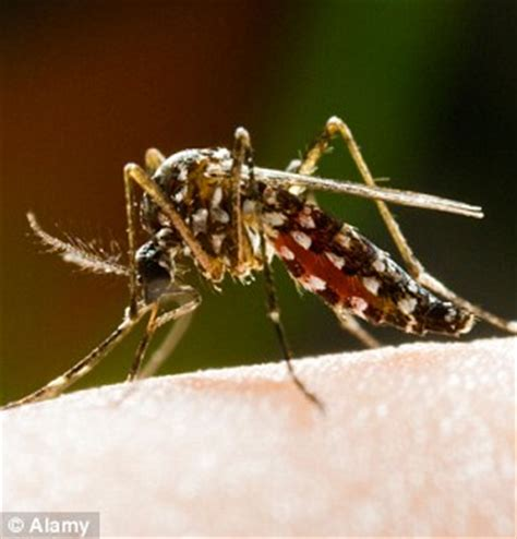 can bed bugs bite through clothing jaeger founder harold tillman making clothes to help fight malaria daily mail online