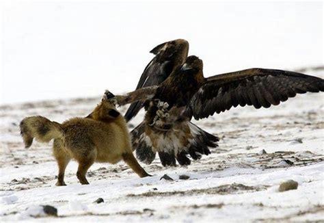 animals fighting primary clarifier animals mix it up amazing