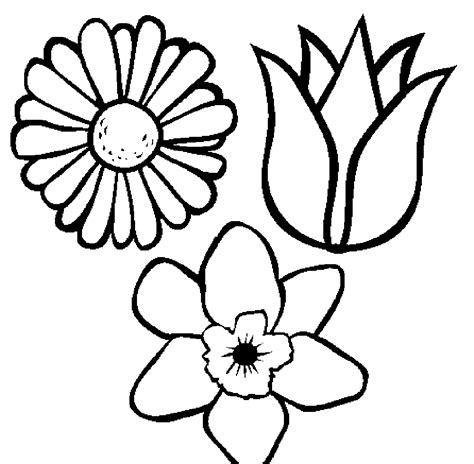 coloring pages of different types of flowers coloring pages flower pot coloring page printable kids