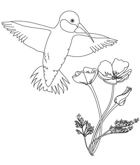 coloring page hummingbird hummingbird with flower coloring pages free