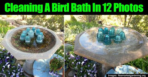 how to make a sparkling clean bird bath in 12 photos