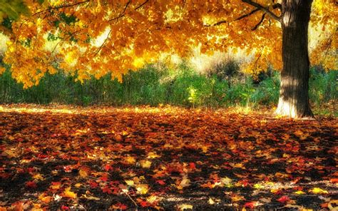 autumn landscapes 2 wallpapers colorful fall landscapes beautiful autumn trees wallpapers http refreshrose