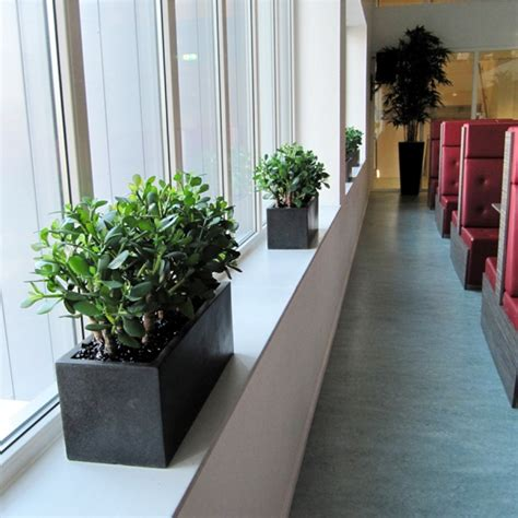 fensterbank alternative crassula kunstplant in plastic pot maxifleur kunstplanten