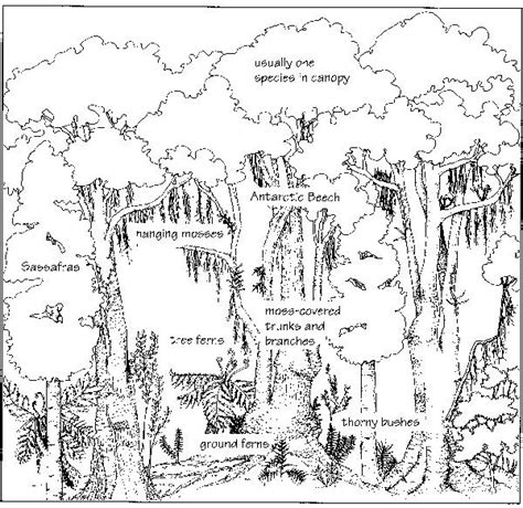 biomes of the world coloring page biomes of the world coloring page google search