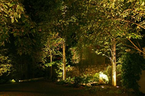 26 Impressive Landscape Trees Backyard Izvipi Com Lights For Small Trees