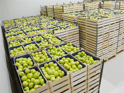 cold storage new year oranges ekapija blueberry packing center in serbia opens