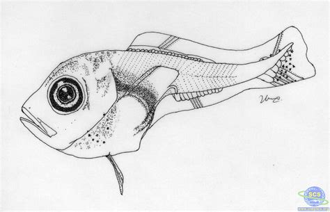 advanced fish coloring pages free coloring pages of deep sea angler fish