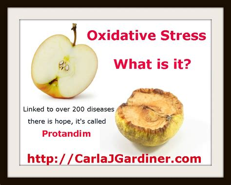 anxiety what turns it on what turns it books oxidative stress healthy or deadly for baby boomers