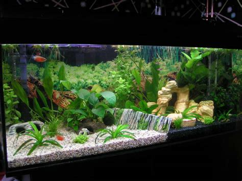home design interior monnie aquarium decorations with light