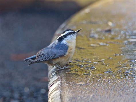 avithera some northern california birds