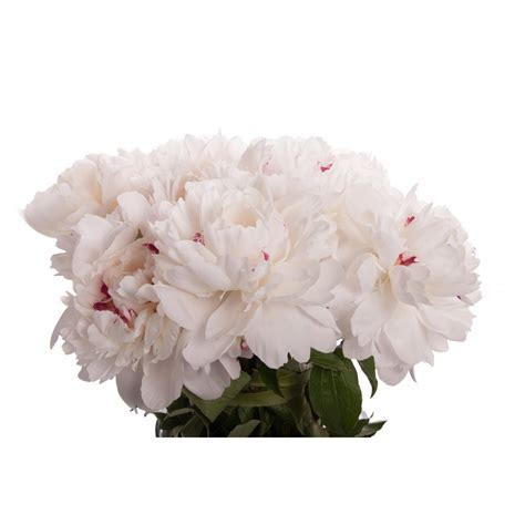 White with Red Peony Bouquet   Peony Bouquets   Gifts