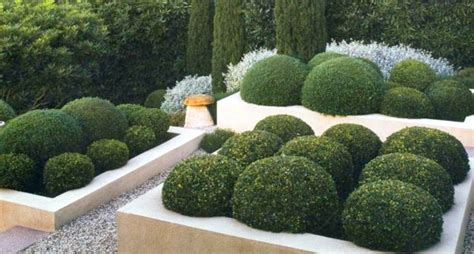 sculpted shrubs kitchentoday