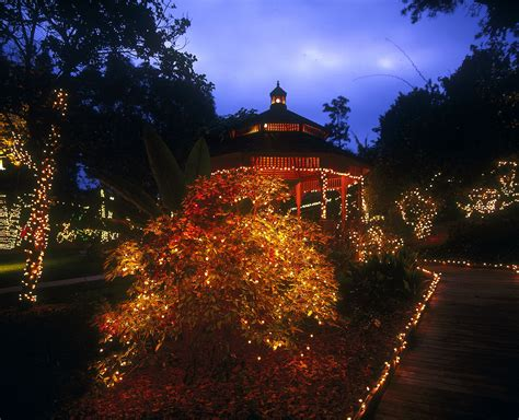 holiday garden of lights at san diego botanic garden in