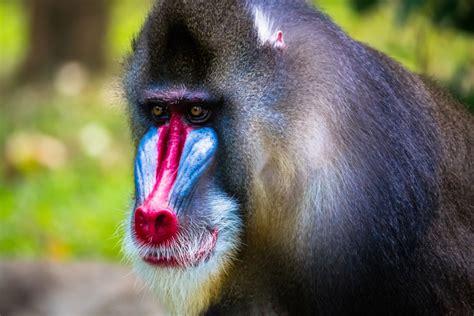 animals   strange noses  wont   real