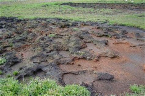 allevamento di casa sigilli sequestrato allevamento con duecento bufale napoli