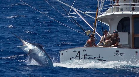 giants boat picture giant marlin www pixshark images galleries with a