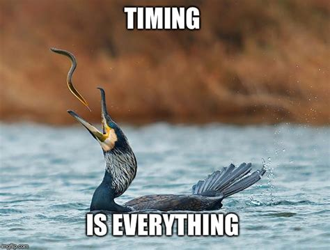Everything Meme - good timing imgflip