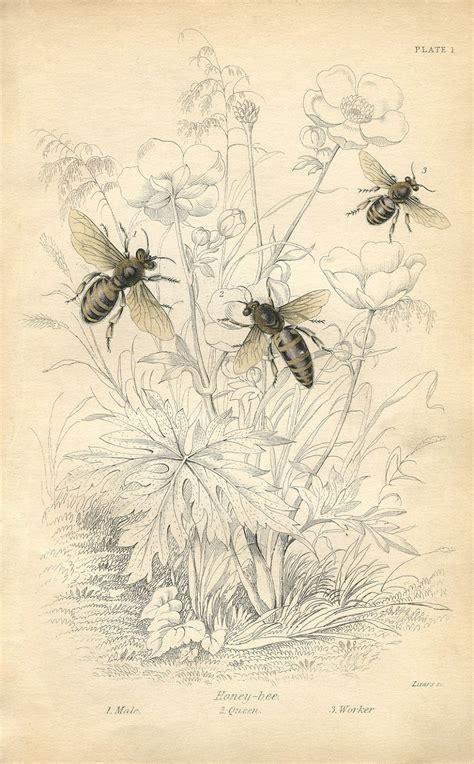 printable retro art vintage printable honey bees instant art the