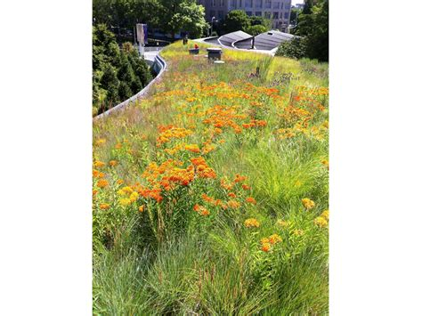 botanic garden visitor center greenroofs
