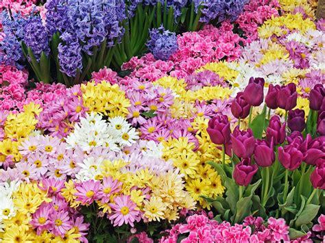 mercato di fiori mercato dei fiori in co palio gazzetta d asti