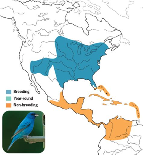 indigo bunting range map buntings birds unlimited birds unlimited