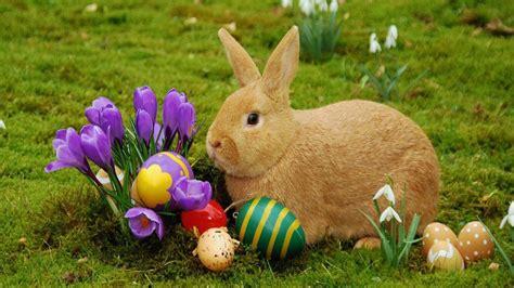 conejo de fuego 2016 semana santa tiempo de vacaciones para aprovechar con los