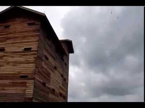 desain rumah walet dari kayu rumah walet dari kayu yang letaknya di pinggiran hutan