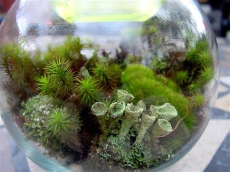 Handmade Terrarium - terrarium kit diy large moss lichen kit featured in 2015