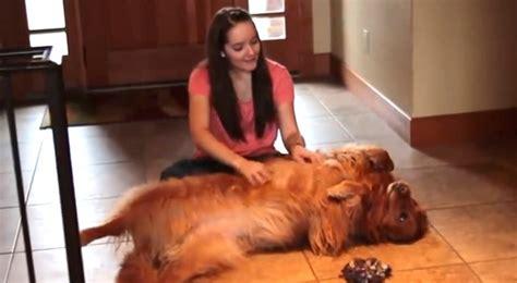 scopa sul divano une fille a peu de temps pour chien a donc cr 233 233