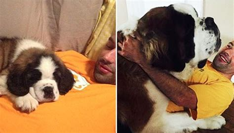 when are dogs no longer puppies 25 dogs who refuse to accept that they re no longer puppies