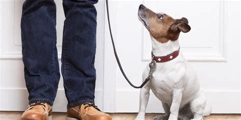 can dogs get norovirus can humans get norovirus from their pets new study suggests dogs can get the stomach