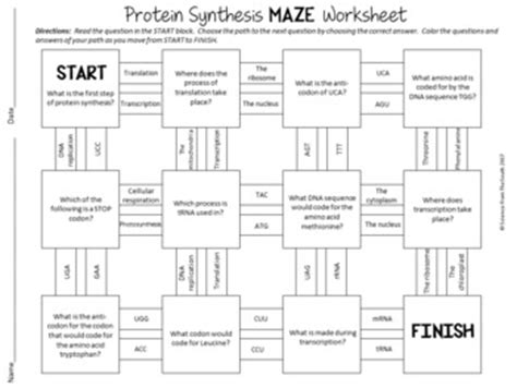 protein 7 synthesis for sale protein synthesis maze worksheet for review or assessment