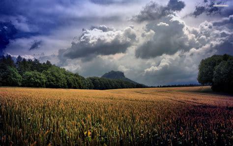 Wheat Magic by Magic Wheat Field Clouds Trees Wallpapers Magic Wheat