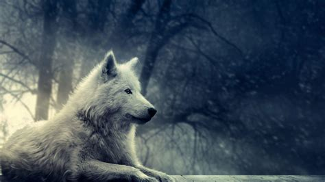 hd wallpapers 1920x1080 wolf wolf wallpapers hd wallpaper cave