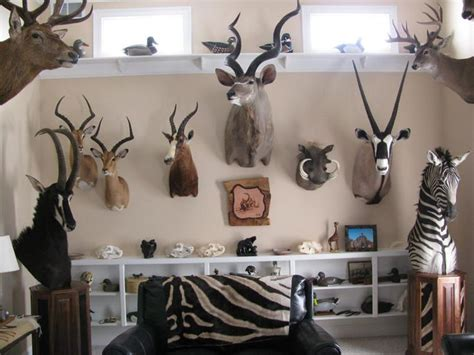 trophy room taxidermy 17 best images about taxidermy trophy rooms on studios taxidermy decor and in