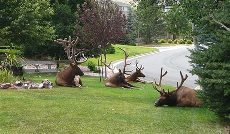 cool lawn ornaments gotta do the animal thing pinterest