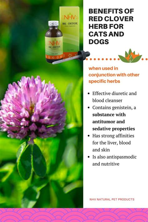 Detox Plants Safe For Cats by 182 Best Herbs For Pets Images On Herbs