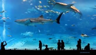Osaka aquarium fish tank jon rawlinson https www flickr com photos